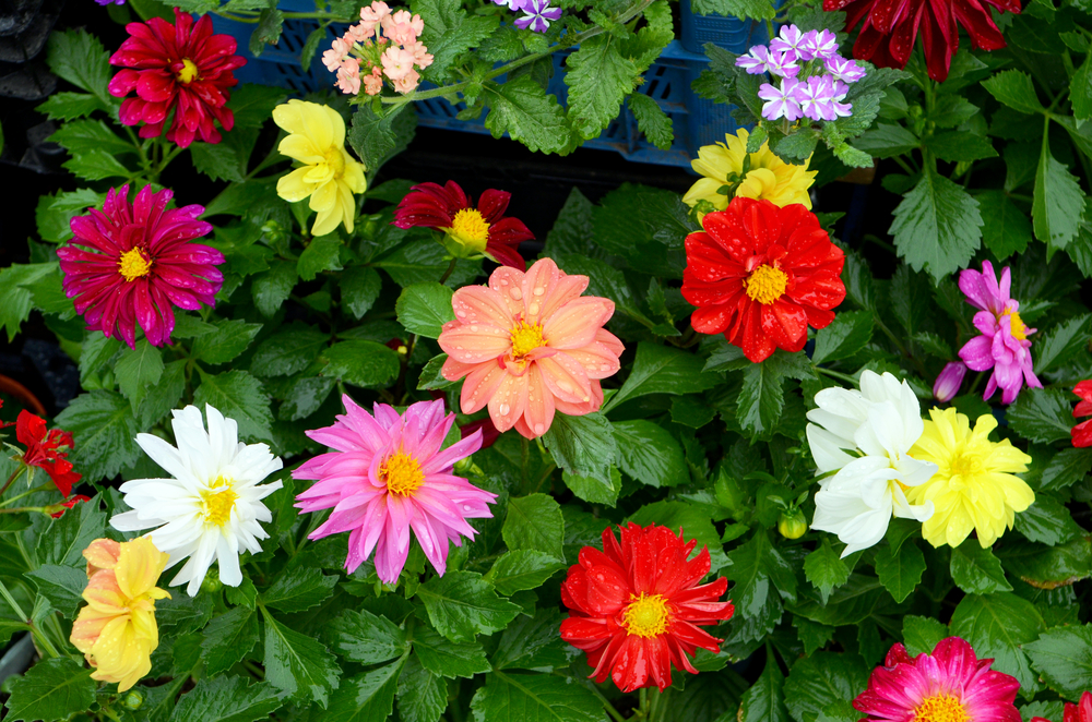 Annuals And Perennials Landscapers Wholesale Market